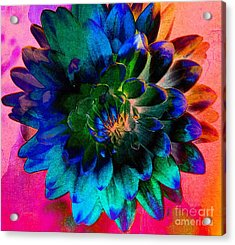Dahlia With Textures Acrylic Print by Kathleen Struckle