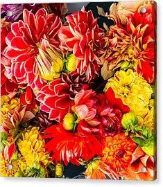 Dahlias Summer Color Acrylic Print