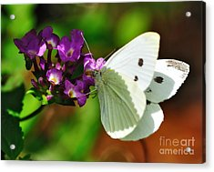 Dainty Butterfly Acrylic Print by Kaye Menner