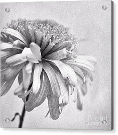 Dainty Daisy Acrylic Print