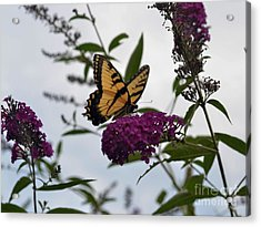 Acrylic Print featuring the photograph Dainty by Judy Wolinsky