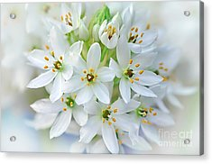 Dainty Spring Blossoms Acrylic Print by Kaye Menner