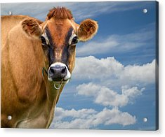 Dairy Cow  Bessy Acrylic Print by Bob Orsillo
