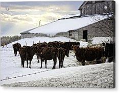 Dairy Farm Acrylic Print by Lisa Bryant