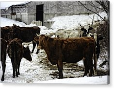 Dairy Queen Acrylic Print by Lisa Bryant