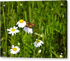 Daisey And Butterfly Acrylic Print