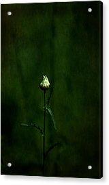 Daisey Acrylic Print