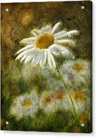 Daisies ... Again - P11at01 Acrylic Print