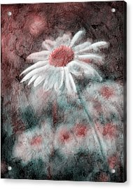 Daisies ... Again - P11ac2t1 Acrylic Print by Variance Collections