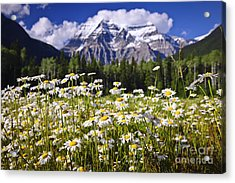 Daisies At Mount Robson Acrylic Print by Elena Elisseeva