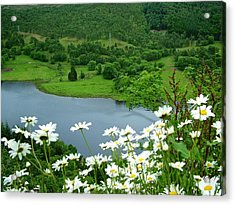 White Daisies At Queens View Acrylic Print