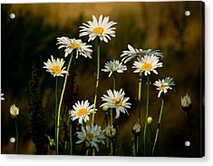 Acrylic Print featuring the photograph Daisies At Rancho San Rafael by Janis Knight