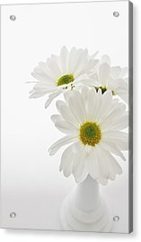 Daisies For You Acrylic Print