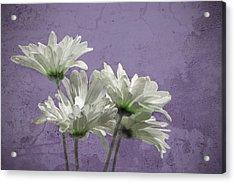 Daisies I Acrylic Print