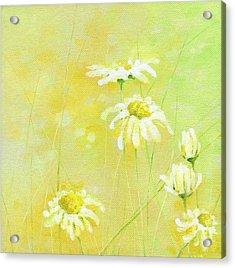 Daisies Acrylic Print by Natasha Denger