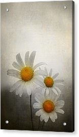 Daisies Acrylic Print by Svetlana Sewell