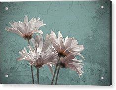 Daisies V Acrylic Print