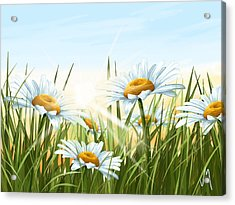 Daisies Acrylic Print by Veronica Minozzi