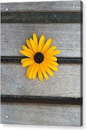Daisy 3 Acrylic Print by Izabela Bienko