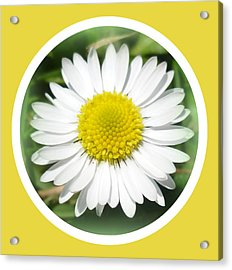Daisy Closeup Acrylic Print by The Creative Minds Art and Photography