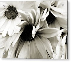 Daisy Cluster In Black And White Acrylic Print by Nancy E Stein