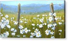 Daisy Dance Acrylic Print