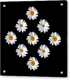 Daisy Diamond Acrylic Print by James Hammen