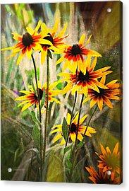 Daisy Do Acrylic Print by Marty Koch