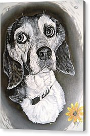 Acrylic Print featuring the painting Daisy Dog by Kevin F Heuman