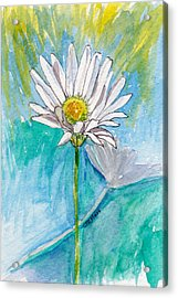 Daisy Expression Acrylic Print by Julie Maas