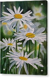 Daisy Garden Acrylic Print by Sharon Freeman