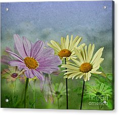 Acrylic Print featuring the digital art Daisy Garden by Shirley Mangini