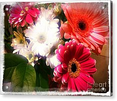 Acrylic Print featuring the photograph Daisy January by Meghan at FireBonnet Art
