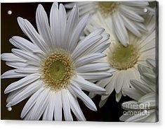 Daisy Photo Acrylic Print