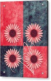 Daisy Quatro V13b Acrylic Print by Variance Collections