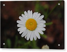 Acrylic Print featuring the photograph Daisy by Robert  Moss