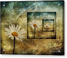 Daisy Shadows Acrylic Print by Shirley Mangini