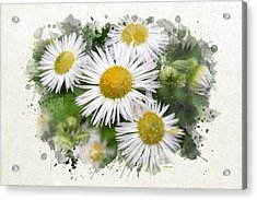 Daisy Watercolor Art Acrylic Print