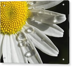 Acrylic Print featuring the photograph Daisy With Raindrops by Rob Graham