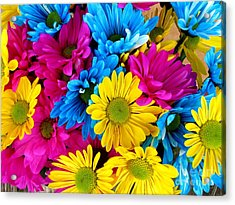 Acrylic Print featuring the photograph Daisys Flowers Bloom Colorful Petals Nature by Paul Fearn