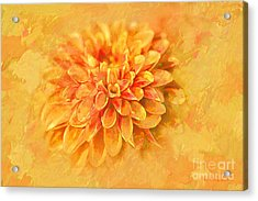 Acrylic Print featuring the photograph Dalhia Abstract by Linda Blair