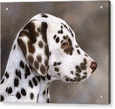 Dalmatian Puppy Painting Acrylic Print by Rachel Stribbling