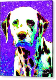 Dalmation Dog 20130125v4 Acrylic Print by Wingsdomain Art and Photography