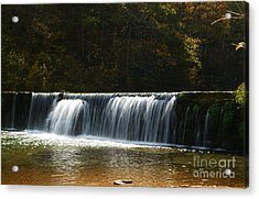 Acrylic Print featuring the photograph Dam Falls At Rockbridge by Julie Clements