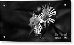 Acrylic Print featuring the photograph Dames En Noir by Linda Shafer
