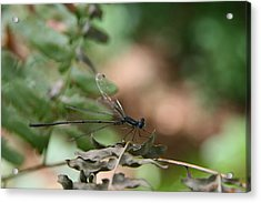 Acrylic Print featuring the photograph Damselfly by Neal Eslinger