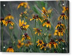 Acrylic Print featuring the photograph Dance Of Flowers by Susan D Moody
