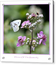 Dance Of The Butterfly Acrylic Print by Martina  Rathgens