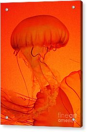 Dance Of The Jellies Acrylic Print by Brigitte Emme