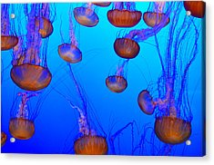 Dance Of The Jellyfish Acrylic Print